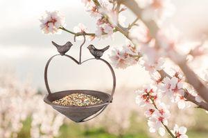 Vogelvoederbak in hartvorm met haak