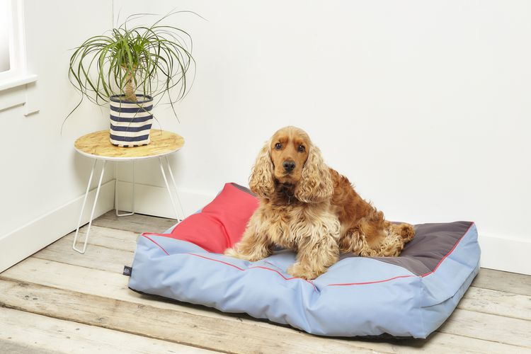 Groot loungekussen van Petstyle (100 x 70 cm)