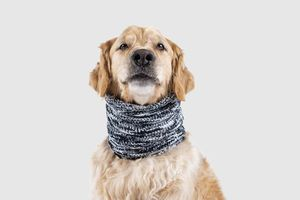 Echarpe pour chien Canada Pooch (taille L)