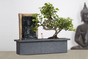 Bonsaï avec cascade bouddha (25 - 30 cm)