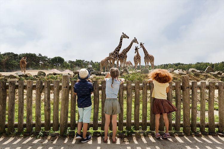 Alleen vandaag: dag op safari in Beekse Bergen (2 p.)
