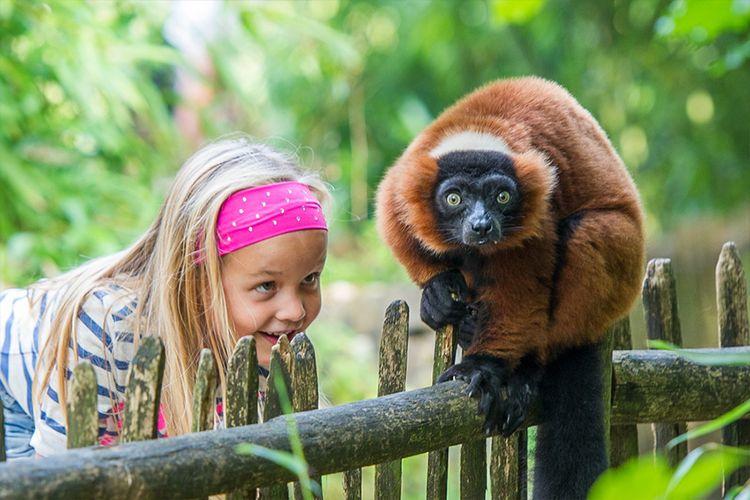 Apenheul - maak kennis met 35 soorten apen (2 p.)